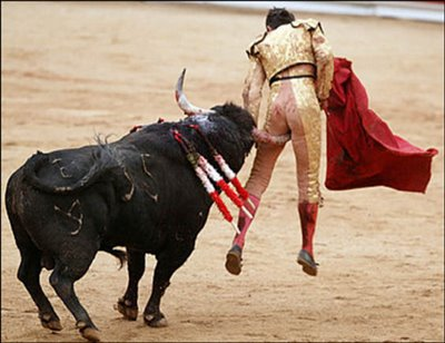picture of bull market